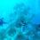 Arrecife artificial, impreso en 3D es el más grande del mundo