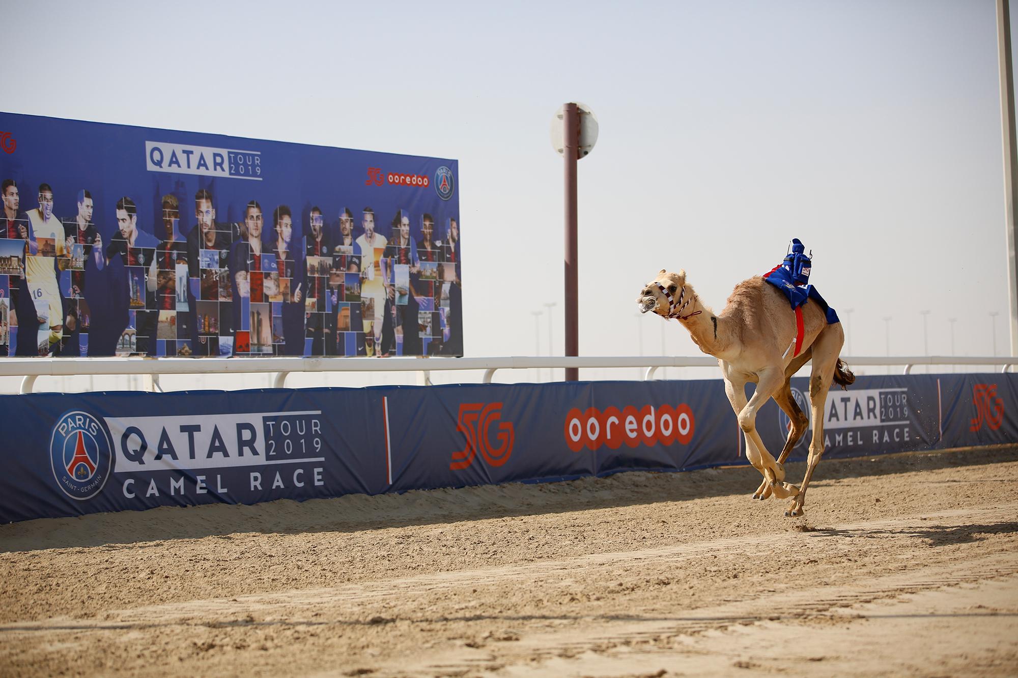 Neymar y Tuchel ganan carrera de camellos de París…